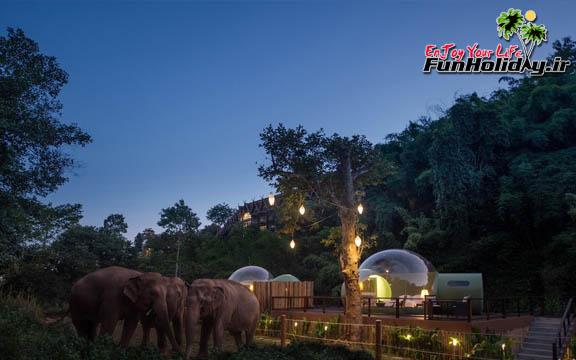 در این اقامتگاه فیل ها بجای خروس ها وظیفه بیدار کردنتان را دارند