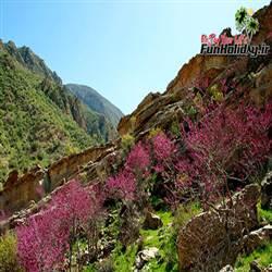 دره ارغوان ایلام ، بهشت رنگها