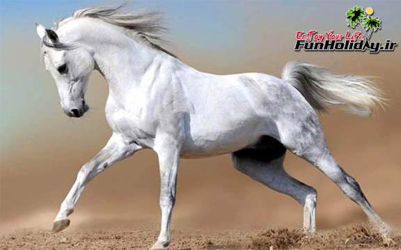 موزه اسب در خراسان شمالی ایجاد میشود
