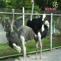 باغ وحش باغلارباغی