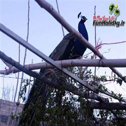 باغ پرندگان صدف