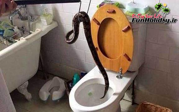 هزاران مار سرگردان در توالت های تایلند
