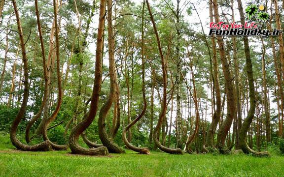 جنگلی از درختان عجیب و خمیده