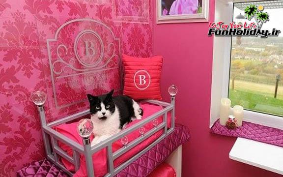 نخستین هتل 5 ستاره دنیا برای گربه ها