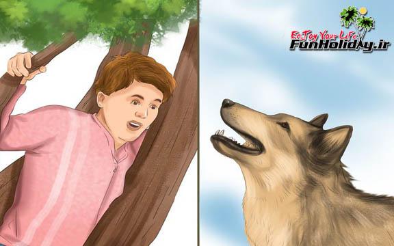 چگونه در کمپ های جنگلی با حمله گرگ مقابله کنیم؟
